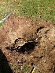 Digging old post