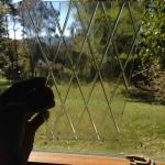 Lamp post light glass