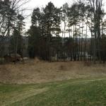 Meadow - April 2013