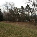 Meadow 2 - April 2013
