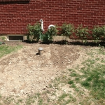 Last week: Smoothed out what was left (those are peonies against the house.)